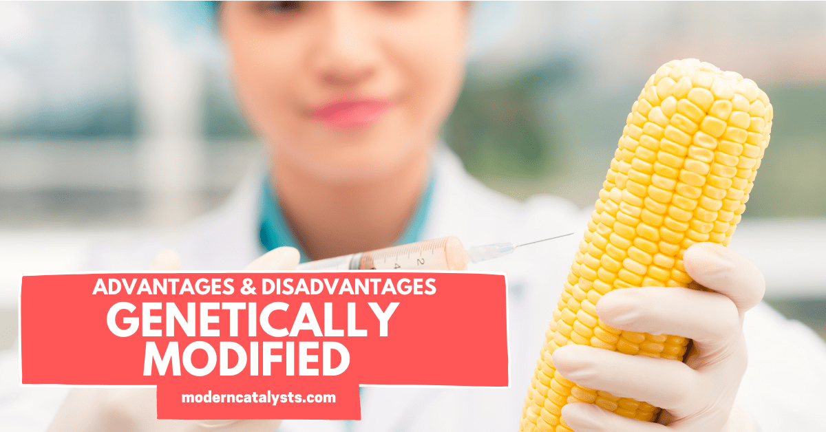 Advantages _ Disadvantages of Genetically Modified Food