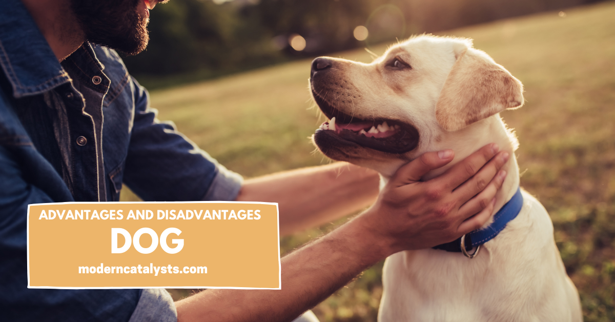 Advantages and Disadvantages of Having a Dog