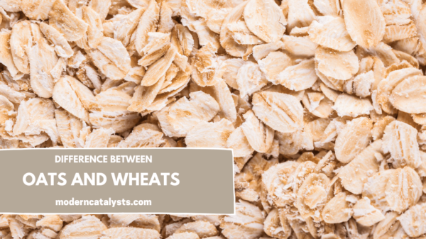 difference between oats and wheats