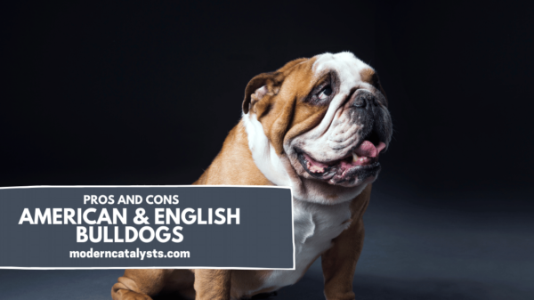 pros and cons of american & english bulldogs